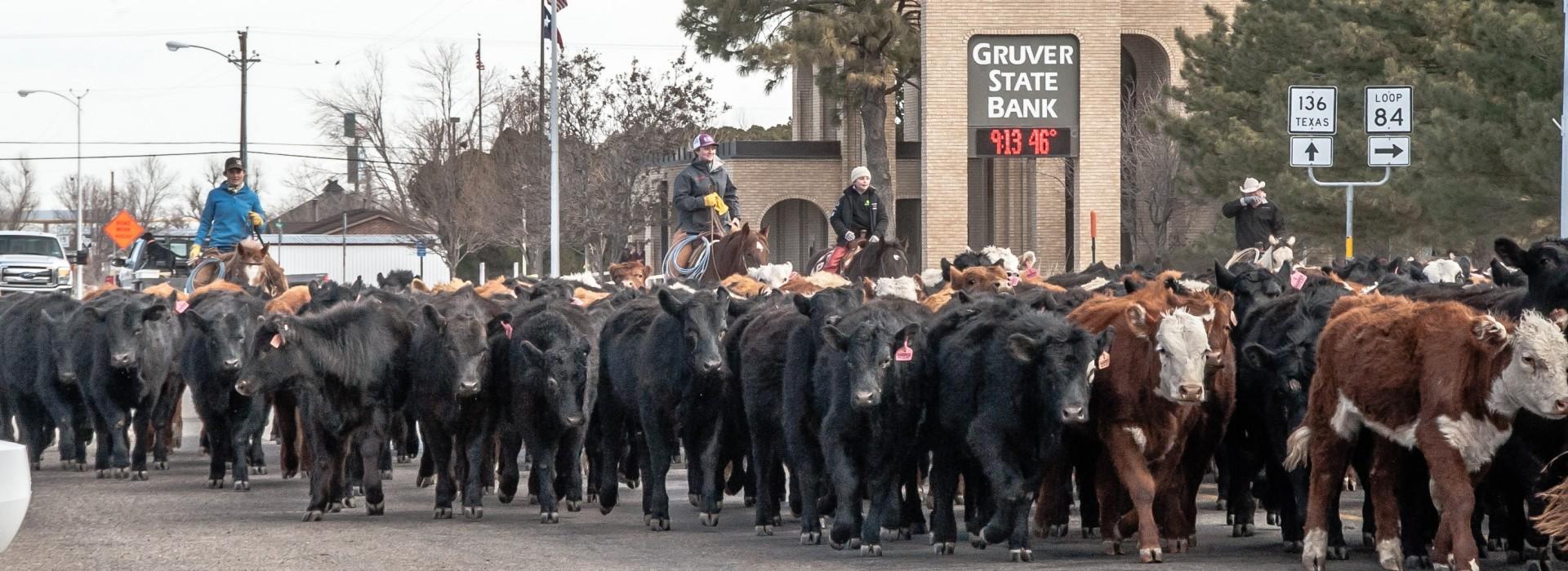 _var_www_gruverstatebank.com_public_html_greyback_core_tmp_cache_thumbnails_1920x700_574_432_crop_cattle-drive